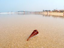 Shell in water while low tide stock photography