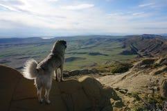I am free. View on the Valley. Georgia- Azerbaijan border Royalty Free Stock Photo