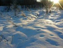 I frosten exponerar inställningssolen ny snö på en röjning av skogen Royaltyfri Bild