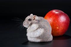 I am on fruit diet Stock Photo
