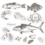 I frutti di mare disegnati a mano di vettore hanno messo - il gamberetto, il granchio, l'aragosta, il salmone, le ostriche, la co Immagini Stock Libere da Diritti