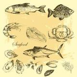 I frutti di mare disegnati a mano di vettore hanno messo - il gamberetto, il granchio, l'aragosta, il salmone, le ostriche, la co Fotografia Stock Libera da Diritti