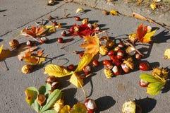 I frutti e le foglie della castagna sulla pavimentazione, castagna caduta di autunno vanno ed altra Immagini Stock Libere da Diritti