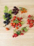 I frutti selvaggi con i crespini, i cornioli, olivello spinoso fruttificano, cinorrodi, frutti delle prugnole e frutti del crateg Fotografia Stock Libera da Diritti