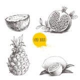 I frutti tropicali di stile disegnato a mano di schizzo hanno messo isolato su fondo bianco Fetta di limone con la foglia, metà d Immagini Stock Libere da Diritti