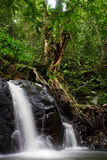 I fuktiga skogar royaltyfri fotografi