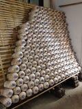 I funghi Fotografia Stock Libera da Diritti
