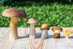 I funghi differenti sono nell'ordine discendente (porcino, boletus del cappuccio di marrone, boletus del arancio-cappuccio, paxil Immagine Stock Libera da Diritti