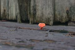 I funghi riguardati il pavimento di legno davanti alla casa ined Fotografie Stock Libere da Diritti