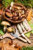 I funghi selvaggi in un canestro hanno preparato per la cena Fotografie Stock Libere da Diritti
