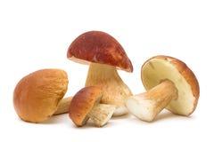 I funghi si chiudono su isolato su fondo bianco Immagine Stock