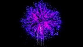 I fuochi d'artificio contano, blu e porpora, contro il nero stock footage