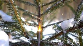 I fuochi d'artificio scintillanti si avvicinano all'albero di Natale stock footage