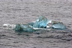 I gabbiani che si siedono sopra il ghiacciaio di fusione ghiacciano vicino a Spitsbergen, Norvegia Fotografia Stock Libera da Diritti