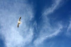 I gabbiani chiudono il volo Fotografia Stock
