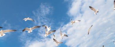 I gabbiani del gruppo stanno volando sul cielo blu della nuvola Fotografia Stock Libera da Diritti