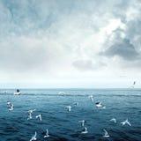 I gabbiani di mare volano immagine stock