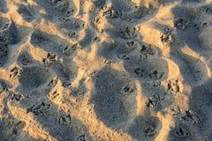 I gabbiani hanno lasciato molte tracce di sabbia sulla costa di Mar Nero fotografia stock libera da diritti