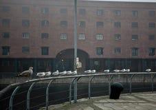I gabbiani si siedono su un'inferriata Fotografia Stock Libera da Diritti