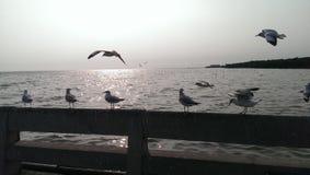 I gabbiani sorvolano il mare e stanno sul ponte Fotografia Stock Libera da Diritti