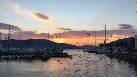 I gabbiani stanno sorvolando la superficie dell'acqua su un tramonto archivi video