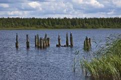 I gabbiani sulle colonne di legno si avvicinano al riverbank fotografie stock libere da diritti