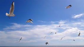 I gabbiani volano al di sopra contro il cielo in buon tempo Più grandi gabbiani bianchi sui precedenti del cielo archivi video