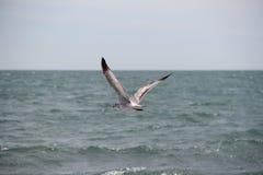 I gabbiani volano alla spiaggia Fotografie Stock Libere da Diritti