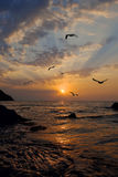 I gabbiani volano contro un sole aumentare Fotografia Stock