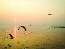 I gabbiani volano in uno stormo in un mare fotografie stock libere da diritti