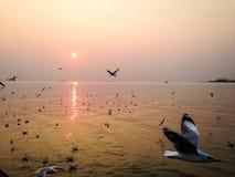 I gabbiani volano in uno stormo in un mare immagine stock