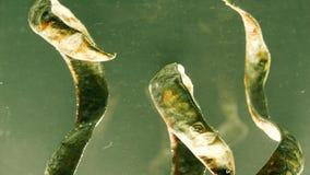 I gambi asciutti delle piante avvolgono le nuvole di pittura rossa hanno dissolto l'acqua, l'umore di autunno archivi video
