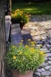 I garofani gialli in vasi si avvicinano alle scale di legno Fotografia Stock