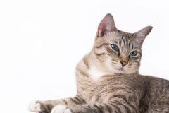 I gatti guardano molto sveglio questo modo immagini stock