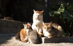 i gatti ottengono il warmmer Fotografia Stock