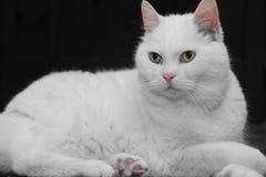 I gatti si rilassano fotografie stock