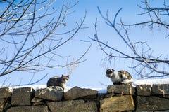 I gatti si siedono di fronte ad a vicenda fotografie stock libere da diritti