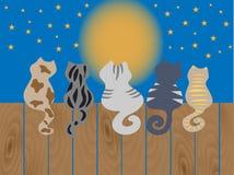 I gatti si siedono su un recinto. Illustrazione di vettore. Fotografie Stock