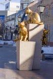 I gatti siberiani Tjumen'quadrato, il 18 marzo 2016 Fotografia Stock Libera da Diritti
