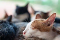 I gatti svegli stanno dormendo insieme Immagine Stock Libera da Diritti