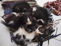 I gattini che ammucchiano sullo straccio per il caldo fotografie stock