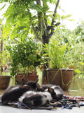 I gattini che ammucchiano sullo straccio per il caldo fotografia stock