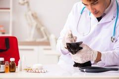 I gattini d'esame di medico del veterinario in ospedale animale immagine stock