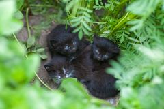 I gattini neri abbandonati, gattini stanno aspettando la mamma, aiutano gli animali senza tetto immagini stock