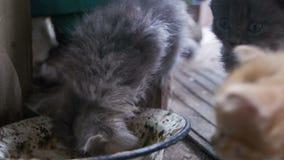 I gattini senza tetto mangiano l'alimento da una ciotola sporca nel cortile della casa stock footage