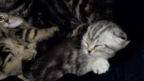 I gattini spaventati provano ad uscire del canestro archivi video