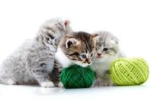 I gattini svegli lanuginosi grigi ed un gattino adorabile a strisce marrone stanno giocando con le palle arancio e verdi del fila Immagine Stock Libera da Diritti