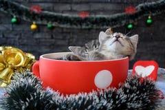 I gattini svegli stanno dormendo fra le decorazioni del ` s del nuovo anno Fotografie Stock