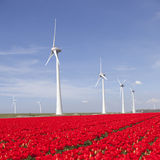 I generatori eolici contro cielo blu ed il tulipano rosso sistemano in Olanda Immagine Stock