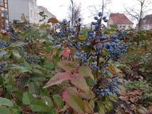 I germogli del fiore hanno ornato la città di Storkow in Germania immagine stock libera da diritti